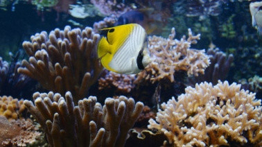 Les petites dents de la mer, visites guidées de l'Aquarium Tropical du Palais de la Porte Dorée