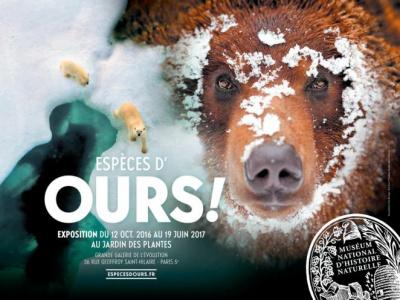 Espèces d'ours, la nouvelle grande expo du Muséum d'Histoire naturelle