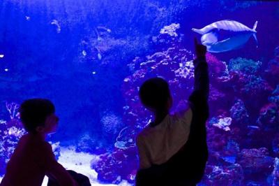 Grand jeu pour le 1er avril à l'Aquarium du Palais de la Porte Dorée