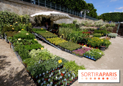 Jardins, jardin aux Tuileries 2014