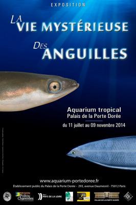 La vie mystérieuse des anguilles à l'Aquarium de la Porte Dorée