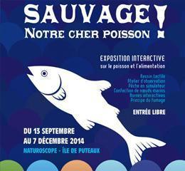 Affiche de l'expo Sauvage ! notre cher poisson