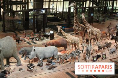 Grande Galerie de l'Evolution - savane