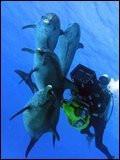 Dauphins et baleines 3D, nomades des mers