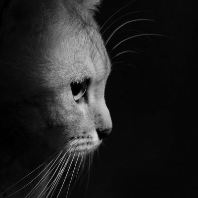 Salon chiens chats 2018 le salon pour mieux les choisir - Salon du chiot paris ...