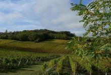 Salon des Vins et des Terroirs