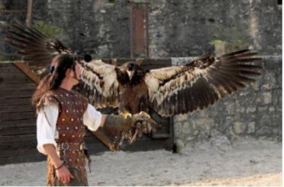 Les aigles des remparts de Provins