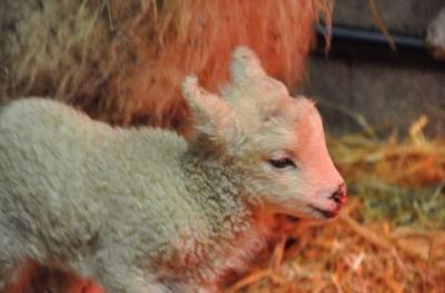 Le Puy du Fou au Salon International de l'Agriculture