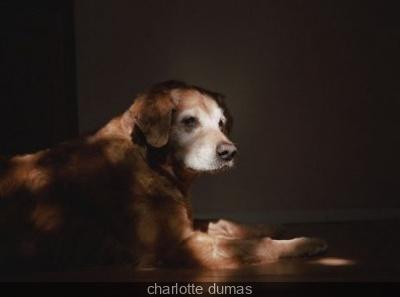 Charlotte Dumas à l'Institut Néerlandais
