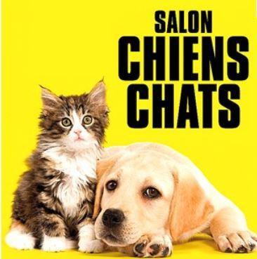 Salon chiens chats 2016 le salon pour mieux les choisir - Chien de salon photos ...