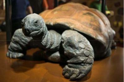 Kiki, la tortue géante des Seychelles