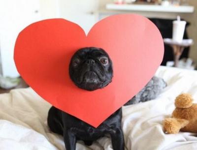 Les français préfèrent passer la Saint Valentin avec leur chien