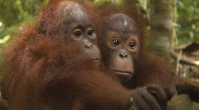 Projection gratuite du documentaire Forêt mouvante