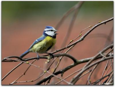 Fête de la nature : Initiation aux chants d'oiseaux à Colombes