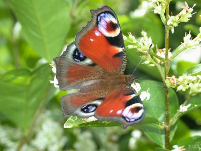 Fête de la Nature : Découverte des papillons à Guiry en Vexin