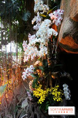 Mille & une orchidées au Jardin des Plantes, les photos