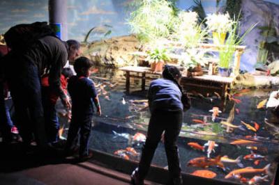 Plankton Invasion à l'Aquarium de Paris