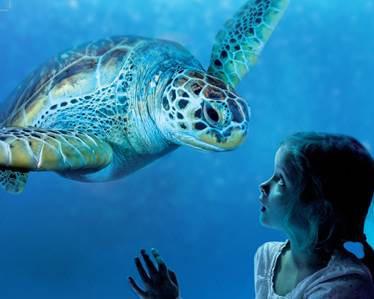 Seastars et Sea-nema à l'Aquarium Sea Life