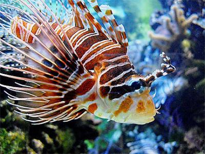 Au fond des océans, 40 ans d'exploration des fonds marins, l'Aquarium tropical du Palais de la Porte Dorée
