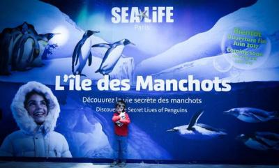 Les Manchots débarquent à Sea Life Paris au Printemps 2017 : les travaux avancent