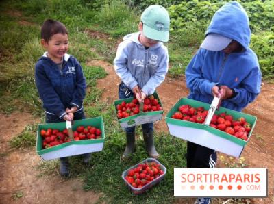 Cueillettes de fraises autour de Paris