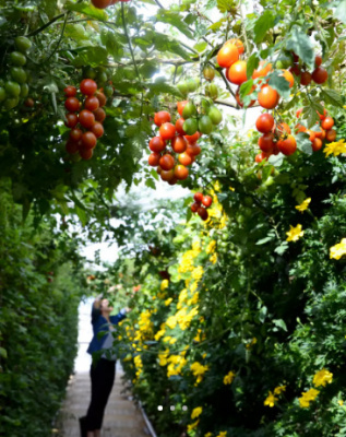 Jardin Perché du BHV Marais