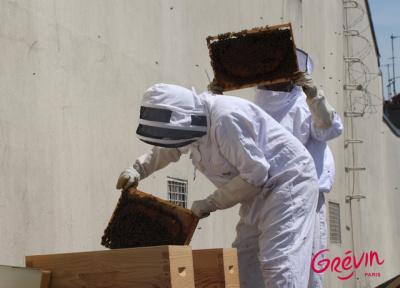 Grévin accueille des ruches sur son toit !