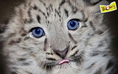 Nouvelles naissances au Zoo de Thoiry !