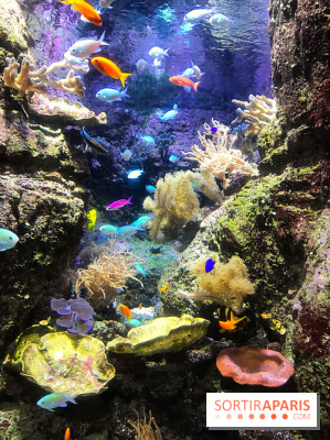 Les récifs Coralliens s'exposent à l'Aquarium de Paris