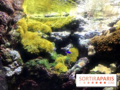 Les récifs Coraliens s'exposent à l'Aquarium de Paris