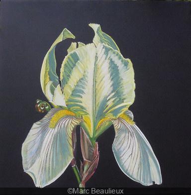 Des iris pour IRIS, l'exposition de Marc Beaulieux à la galerie Popy Arvani