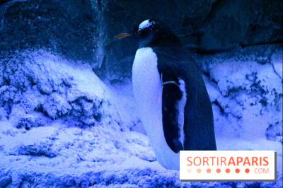 Les Manchots de l'Aquarium Sea Life
