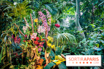 Mille et une orchid es 2018 au jardin des plantes for Au jardin des plantes chambery