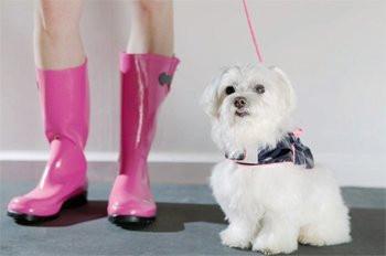 Plus de 300 races au salon international du chien for Salon du chien