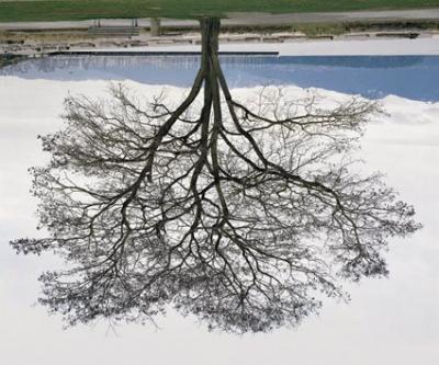 Jeu de Paume, Jericho Beach Tree, Rodney Graham,
