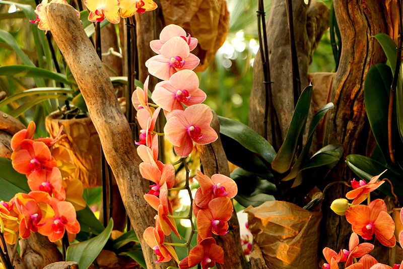 Mille et une Orchidées 2018, l'expo-vente du Jardin des Plantes - Sortiraparis.com