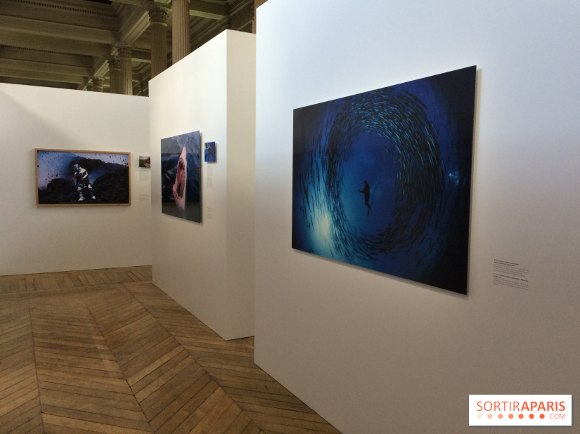 National Geographic s'expose au MNHA : nos images de l'expo
