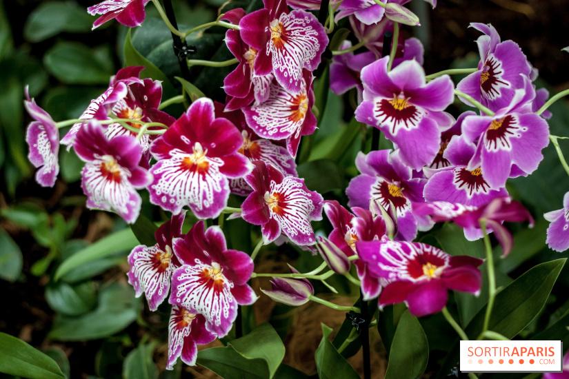 Mille et une Orchidées 2018 au Jardin des Plantes - Hôtel de Venise