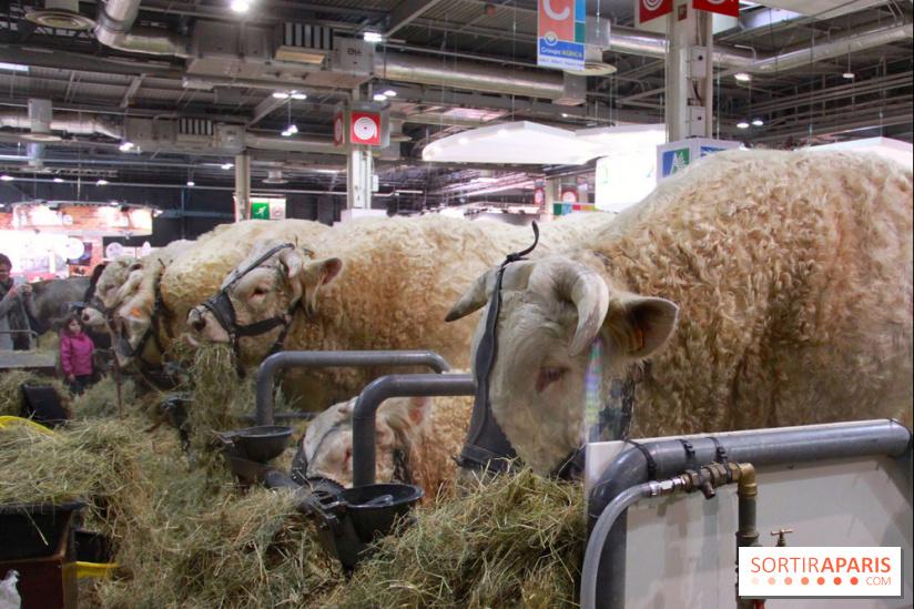 Salon De L U0026 39 Agriculture 2019  U00e0 Paris