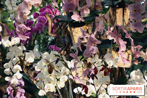 Mille et une Orchidées 2019 au Jardin des Plantes - Sortiraparis.com