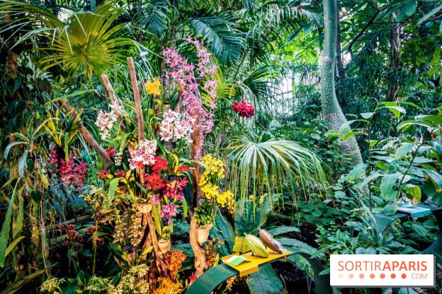 Mille et une Orchidées 2018 au Jardin des Plantes - Sortiraparis.com