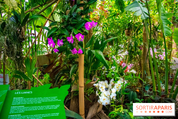 A thousand and one orchids 2019 at Paris Jardin des Plantes ...