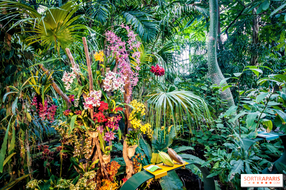 A thousand and one orchids 2018 at Paris Jardin des Plantes ...
