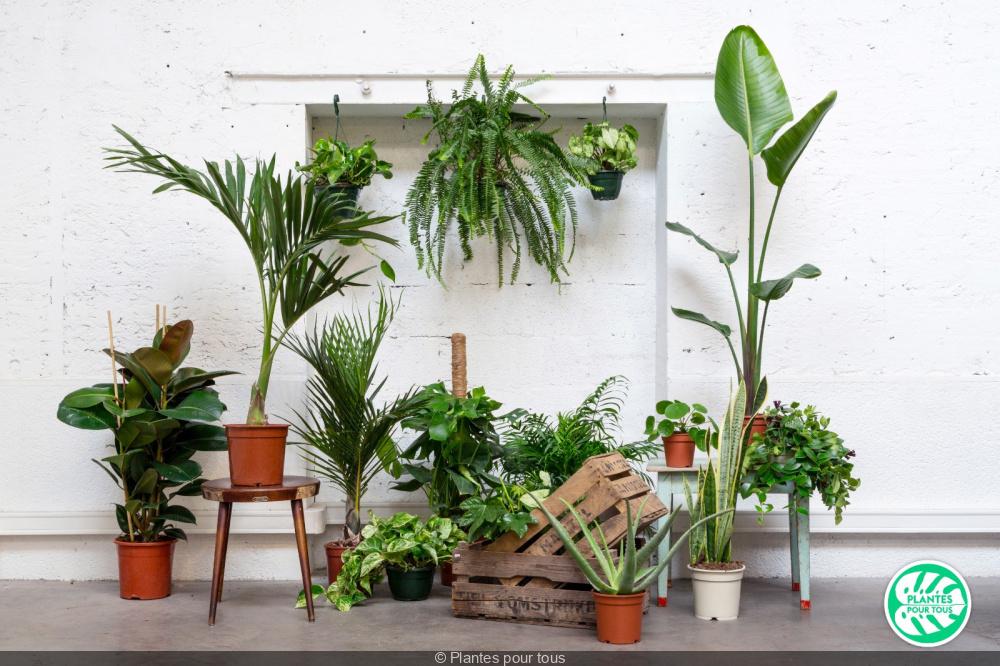 Plantes Pour Tous Une Vente En Ligne Pour Vegetaliser La Maison Sortiraparis Com