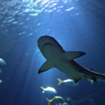 L'Aquarium de Paris délocalise ses bassins au Renaissance Le Parc Trocadéro