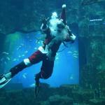 Noël 2018 à de l'Aquarium de Paris
