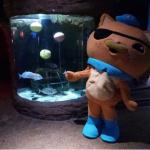 Le programme de l'été 2018 à l'aquarium Sea Life Paris