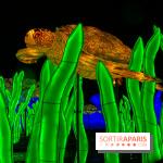 Océan en voie d'Illumination, le festival des lumières du Jardin des Plantes 2019