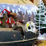Les vacances de Noël 2019 à la Bergerie Nationale