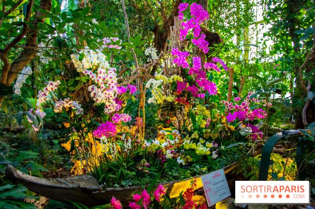 Mille et une Orchidées 2019 au Jardin des Plantes, photos et vidéo ...